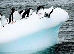 Невидимая жизнь, скрытая под льдом Антарктиды