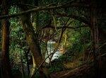 Амазонский миф о мести джури