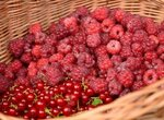От чего зависит сладость смородины, малины, крыжовника?