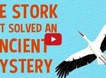 Гипотезы о миграции птиц - причудливые и восхитительные
