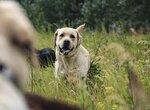 Можно ли давать собаке сырые говяжьи почки?