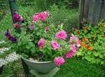 Лютики-цветочки или увлекательное крестьянство