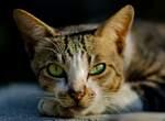 Как заставить кошку проглотить суспензию?