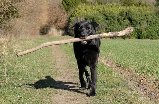 Про собак и пешеходов