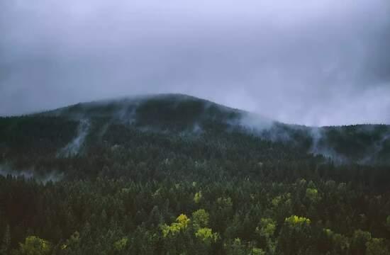 Нетронутые лесные ландшафты имеют решающее значение для биоразнообразия