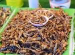 По оценке безопасности продуктов ESFA, сверчки «не вредны для питания»