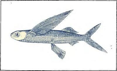 Почему рыбы могут летать?