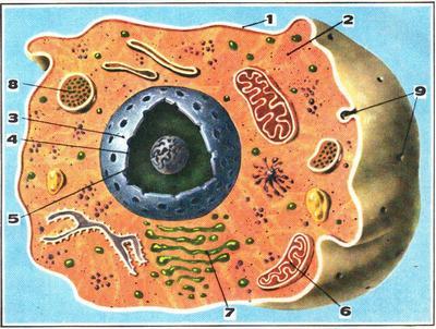 Сложная жизнь простой клетки