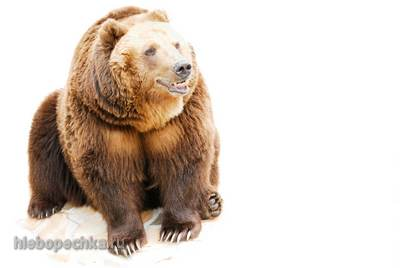 8 интересных фактов про медведей