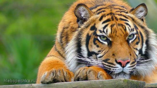 Животные в пословицах и поговорках
