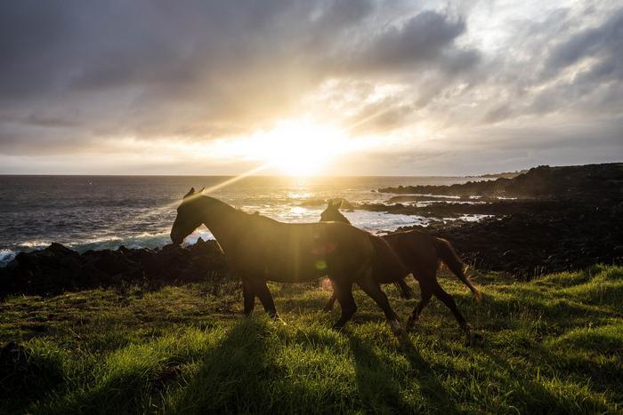 Масти лошадей