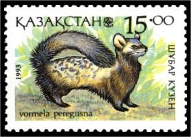 Южнорусская перевязка Vormela peregusna Marbled polecat