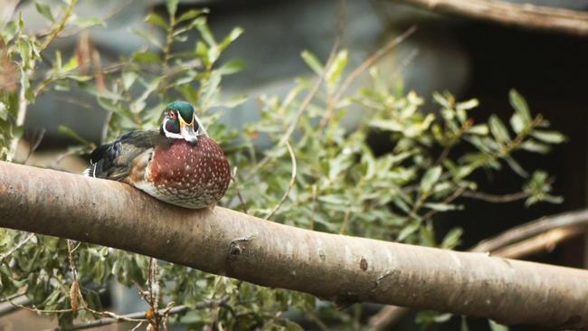 Зимовка птиц у туркменского побережья Каспия