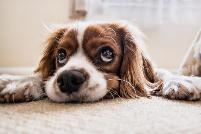 Прежде, чем взять щенка...