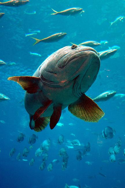 Рыбы с глубины