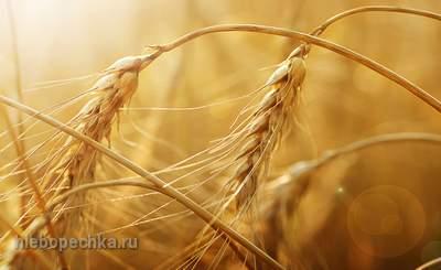 Свойства пророщенной пшеницы