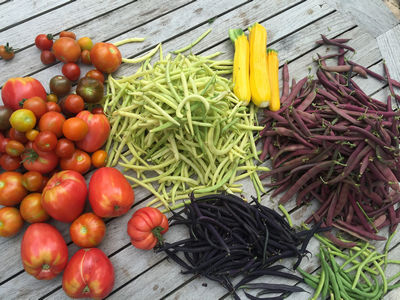 Дары огорода и сада