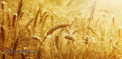 Здоровое питание: продукты без жира, сахара и соли