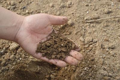 Агротехнический метод защиты садовых насаждений от вредителей и болезней