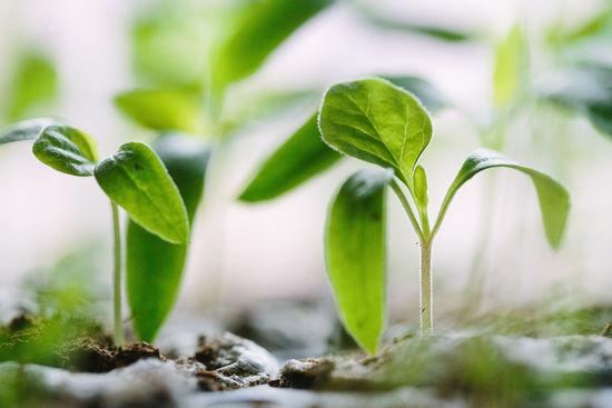 Нарушение периода покоя у вегетативных частей растения