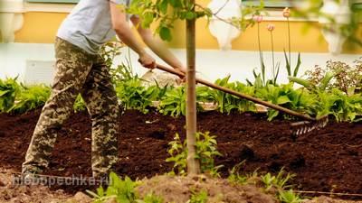 Органическое земледелие – возвращение к природе