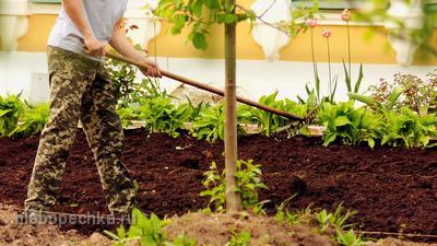Основы садоводства