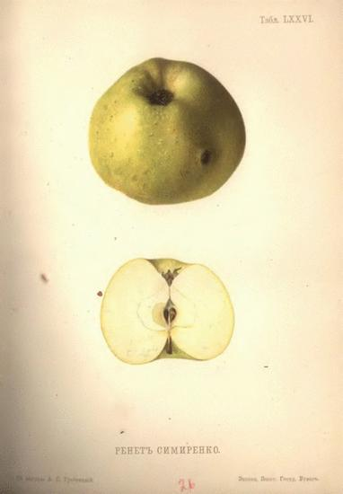 История сорта домашней яблони