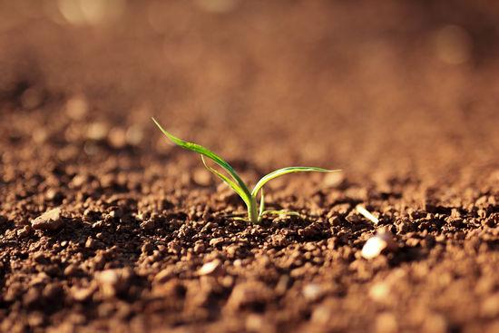 Семена и микроорганизмы