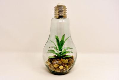 Свет как формирующий фактор растений