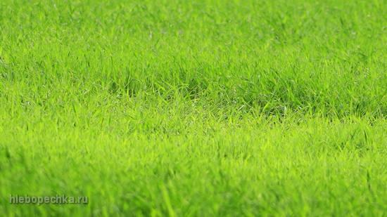 Зеленое удобрение и травяная мульча