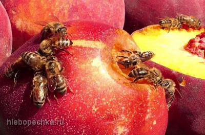 Жизнь пчелиной семьи зимой