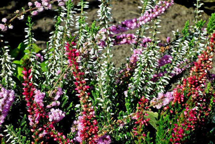 Что стимулирует рост растений