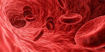 Основные анатомо-физиологические сведения об артериях