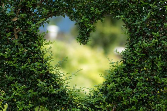 Сердце под защитой