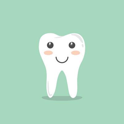 Строение зуба и челюсти