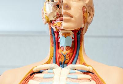 Связь ангины и хронического тонзиллита с другими заболеваниями организма