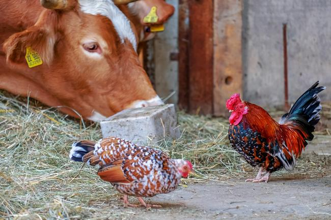 Красное мясо против белого какое лучше при здоровом питании