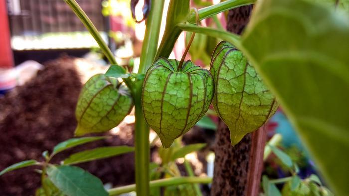 Целебные истоки растений
