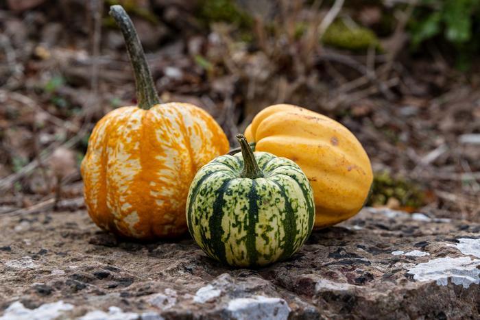Строение и химический состав овощей и фруктов