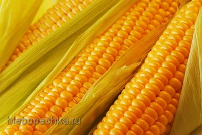 Кукуруза на все случаи жизни