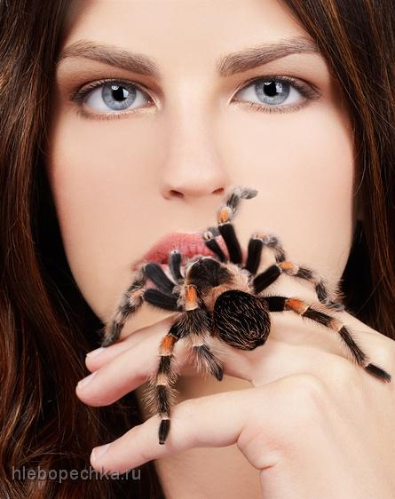 Экзотическая кухня: пауки