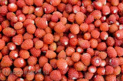 Земляника: царская ягода на нашем столе