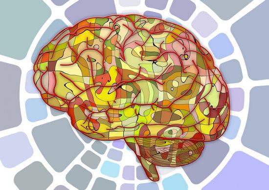 Головной мозг и психика