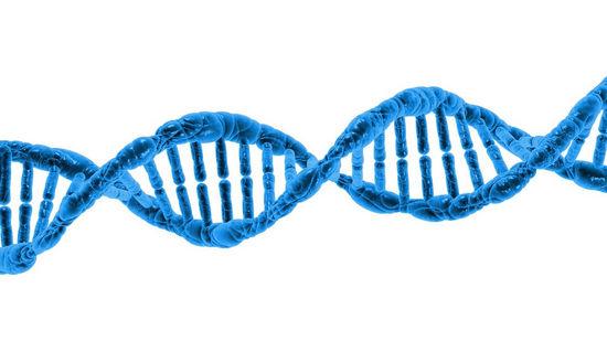 Как строятся белковые структуры