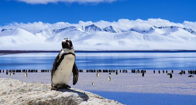 Какого цвета Антарктида?